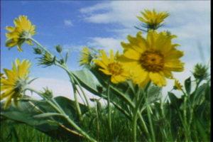 aseasononthemove_still3_flowers